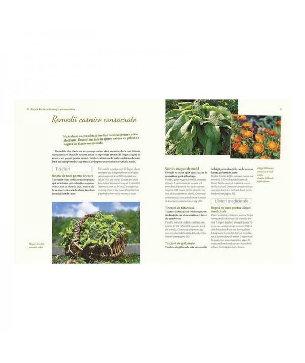 Plante medicinale si aromatice din gradina bunicii