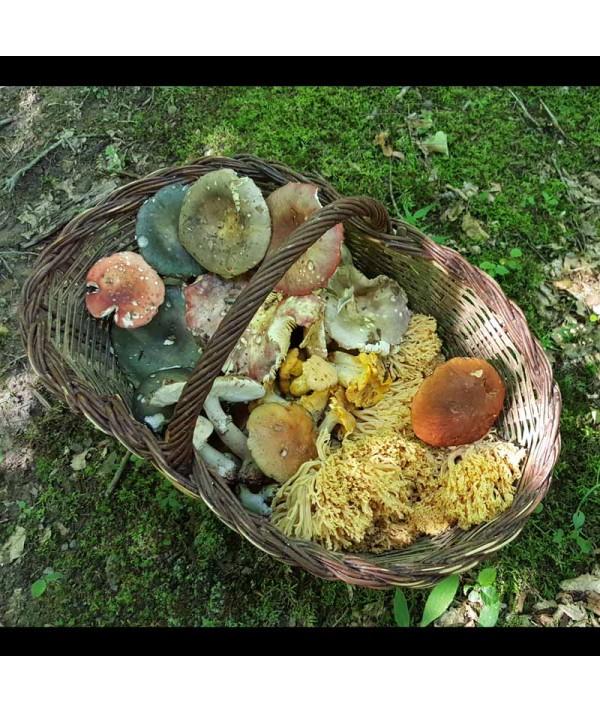 Curs de cules ciuperci salbatice comestibile