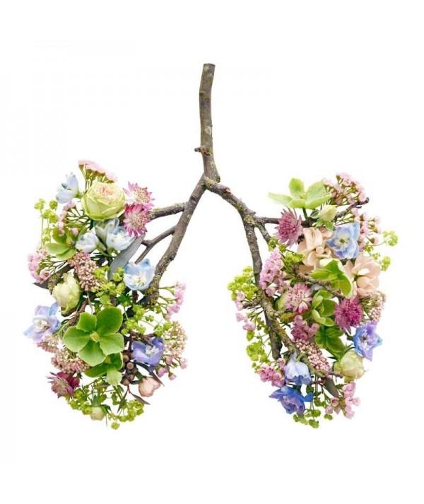 Curs despre aparatul respirator si plantele medicinale