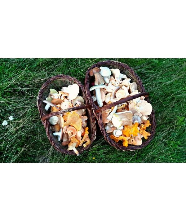 Curs de initiere la culesul de ciuperci salbatice